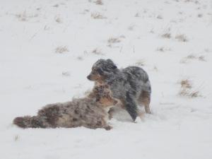 Dakota und Nikan im Schneesturm