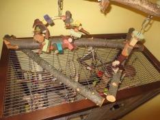 Krallenpflege - Zweige 4
