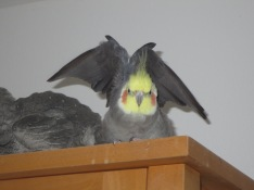 Adonis wie eine Fledermaus